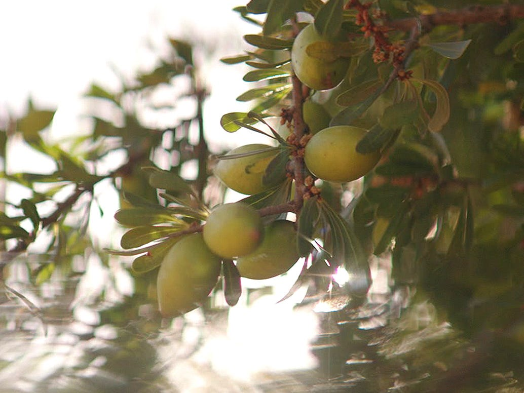 argan_benefits_right